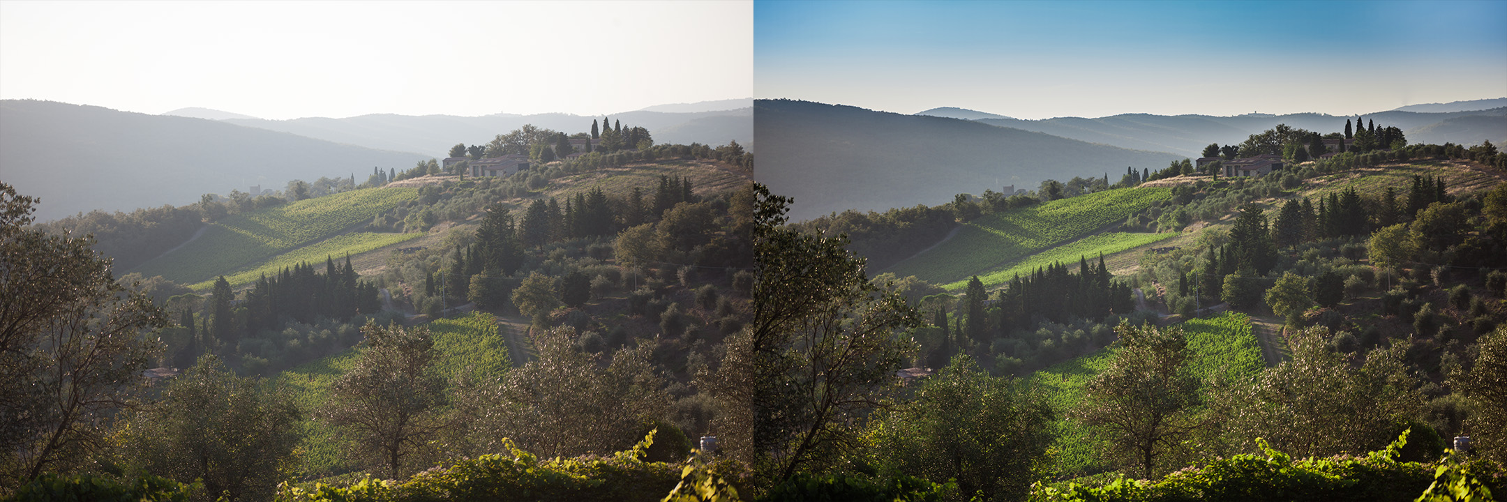 Confronto immagine raw e corretta by DiMMD esterno paesaggio con vigna
