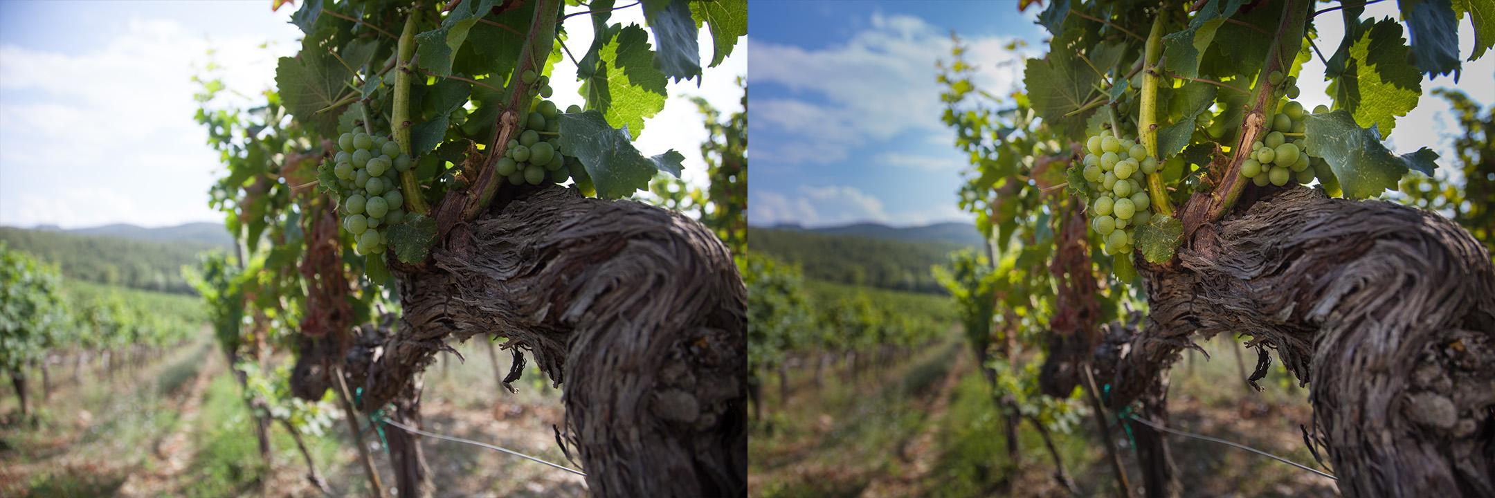 Confronto immagine raw e corretta by DiMMD dettaglio vite uva bianca