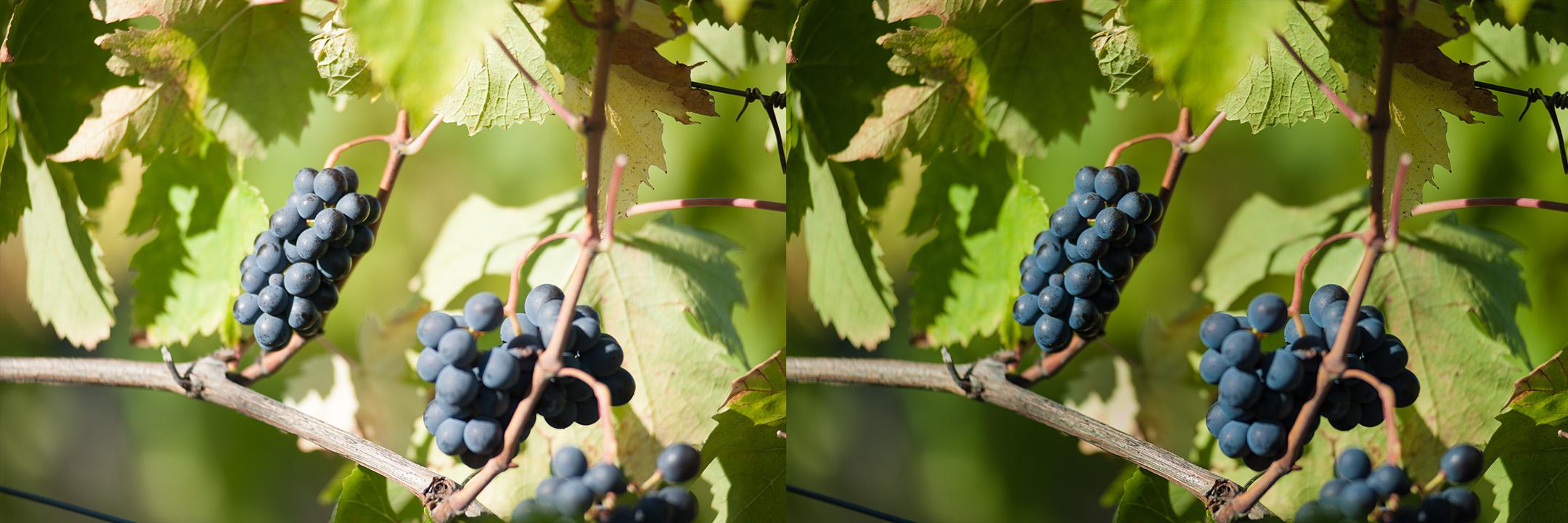 Confronto immagine raw e corretta by DiMMD dettaglio uva rossa